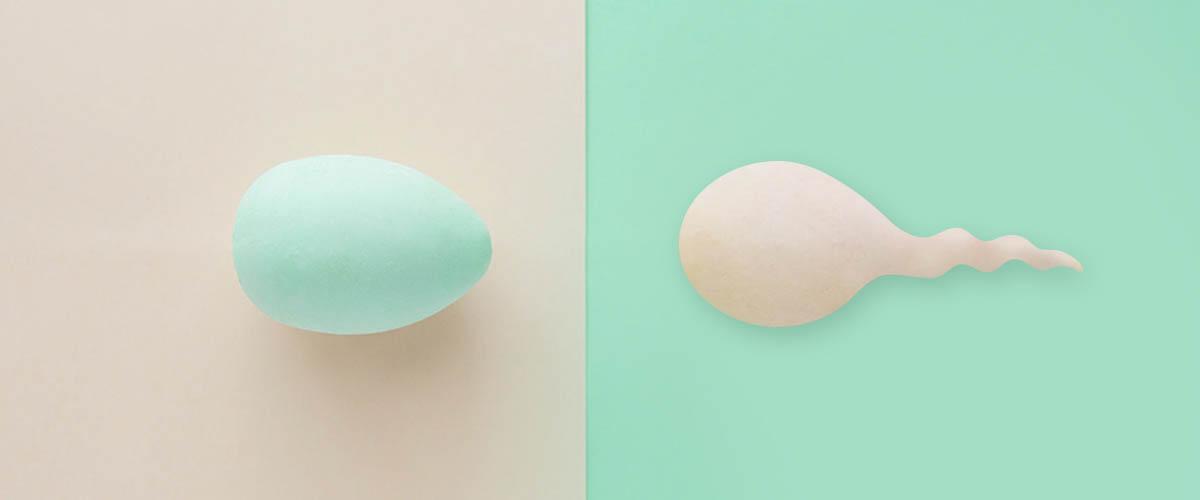 Genea donate eggs and sperm image